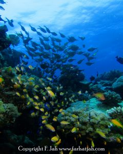 Why Dive the Island of Pemba