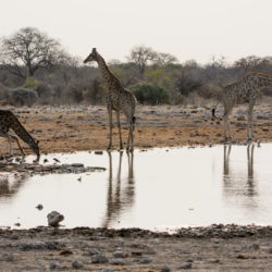 Namibia Safari-2835